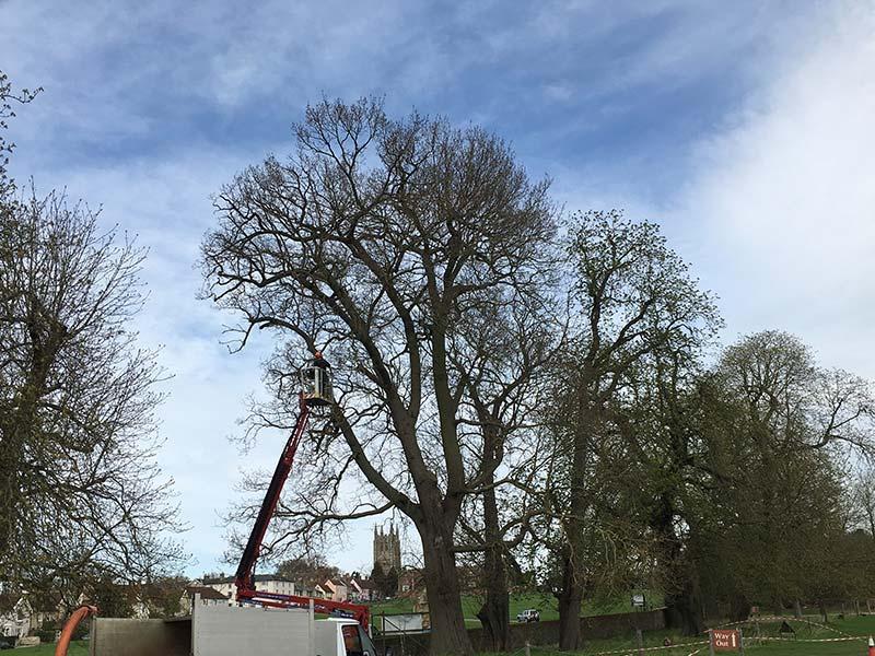Tree Crown Cleaning, Sudbury, Suffolk
