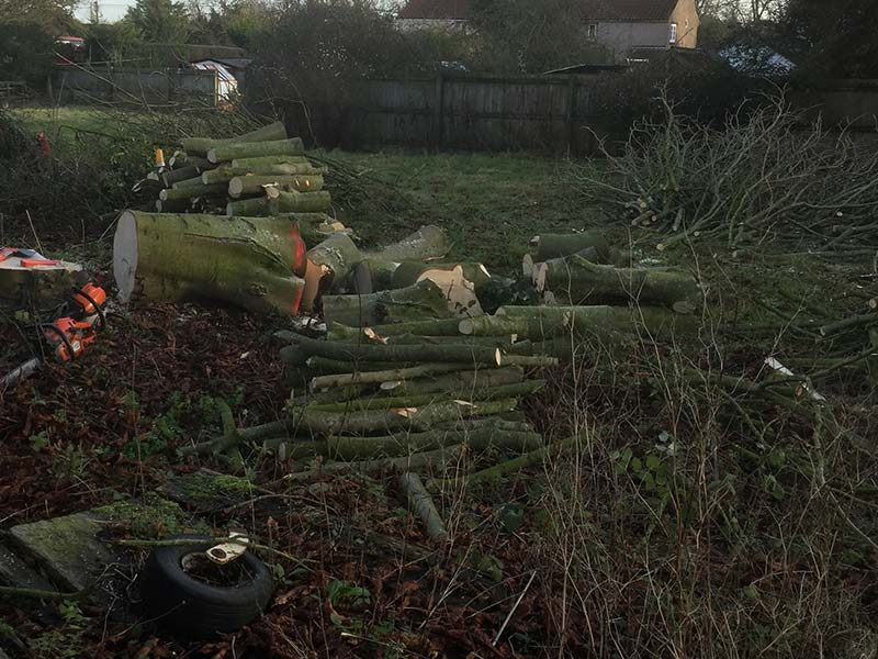 Dead Wood Removal - Branch Tree Management Services