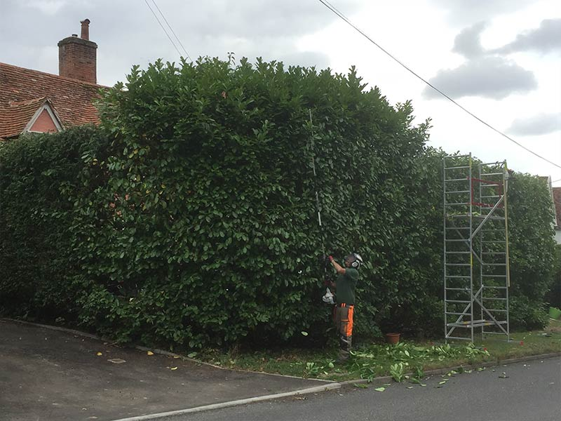 Branch Tree Management Services - Sudbury, Suffolk