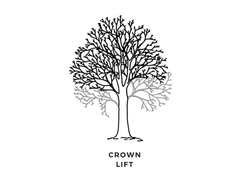 Branch Tree Management Services - Sudbury, Suffolk